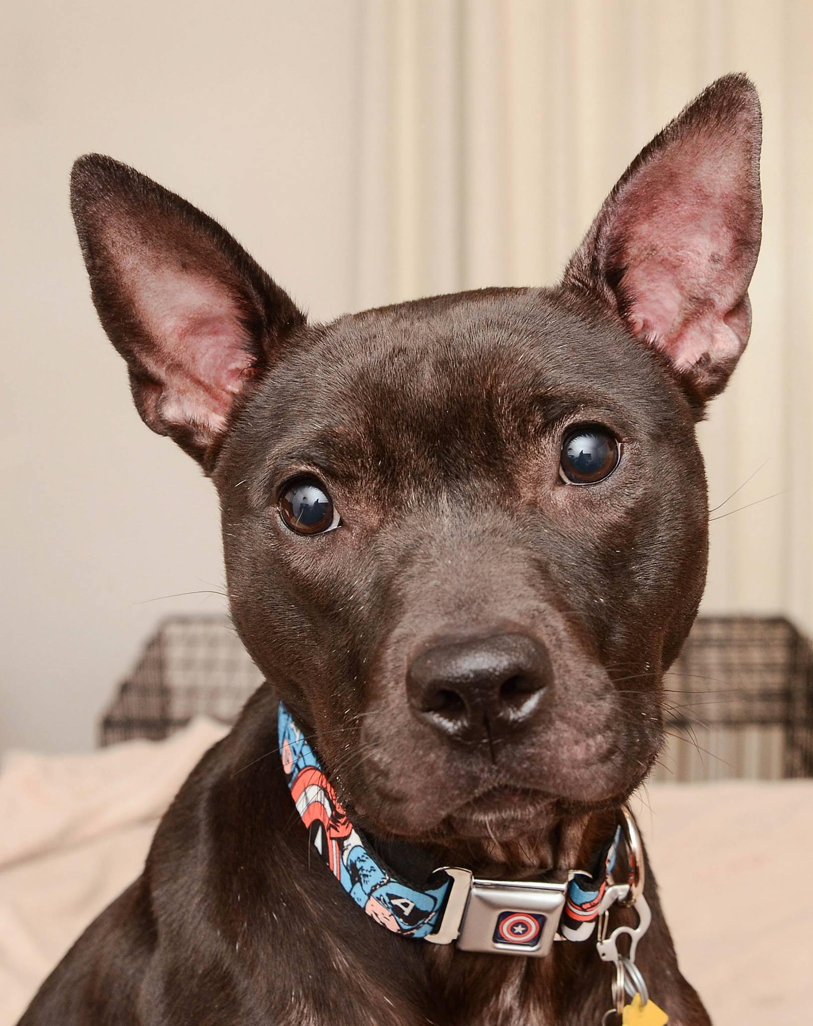 Ella's Lead dog Maggie