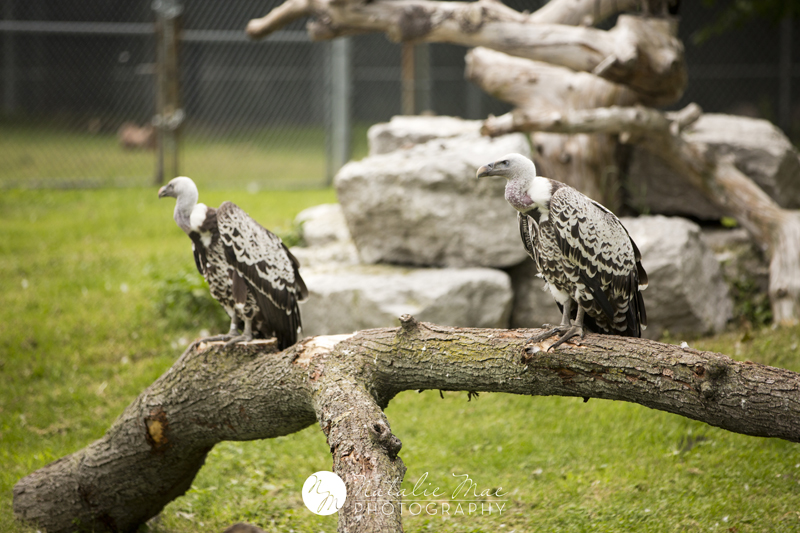 Vultures, definitely remind me of that song in Ice Age.