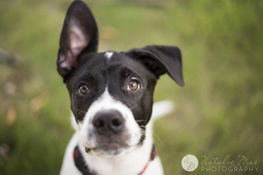 Those ears are made for this Ann Arbor pet photographer's camera.